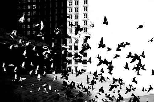 Tessellaction por Hughes Léglise-Bataille