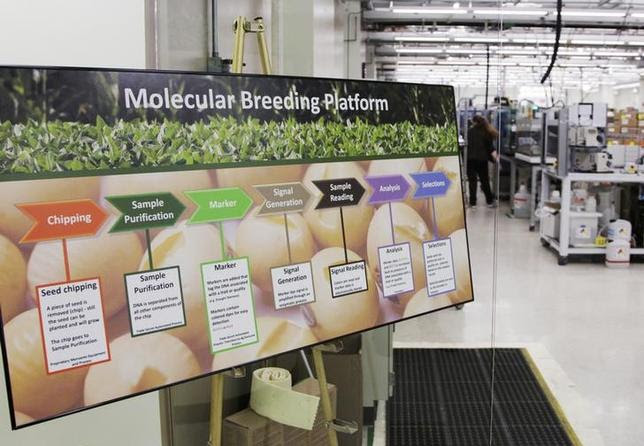 A sign showing the plant breeding process is seen in the molecular breeding lab in the Monsanto research facility in Chesterfield, Missouri, July 28, 2014. REUTERS/Tom Gannam