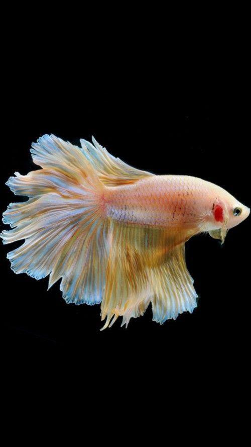 Download 7000 Wallpaper Apple Fish HD Paling Baru