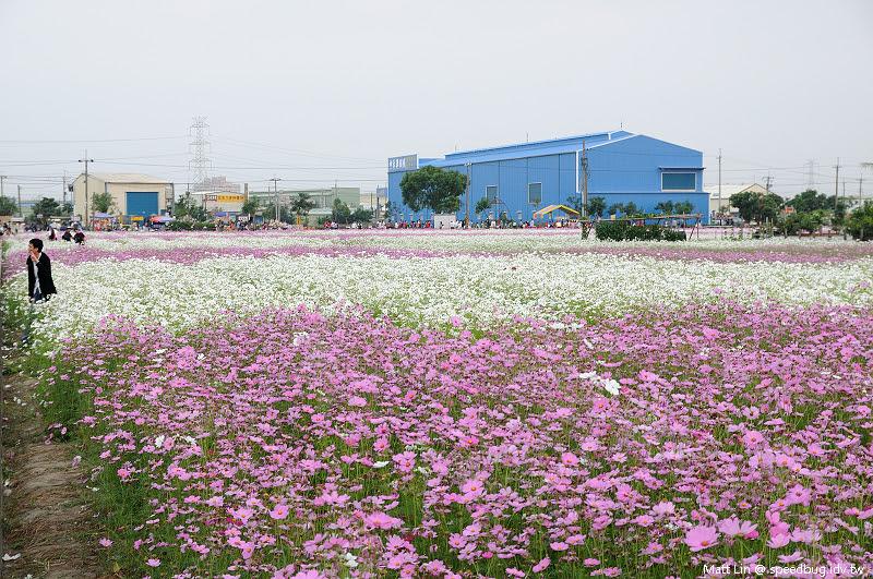 大寮花海 (17).jpg