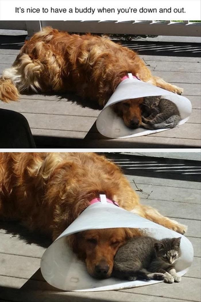 Its Nice To Have A Buddy When Your Down And Out Pictures Photos