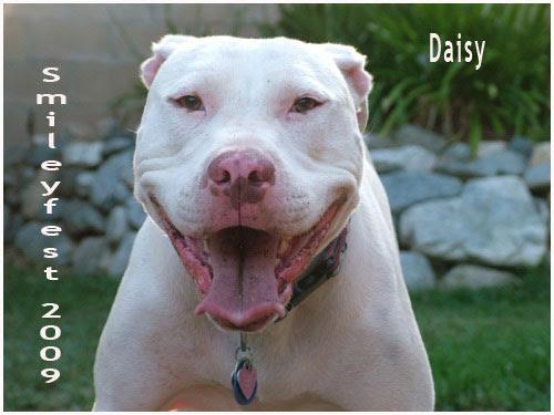 42-Daisy---2
