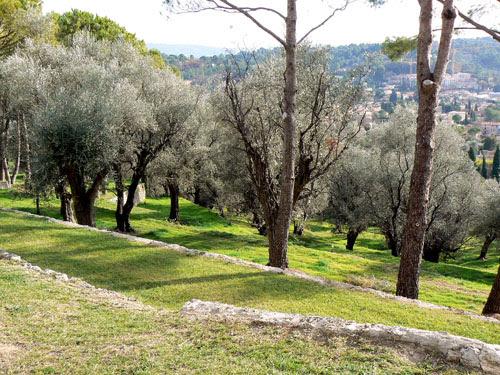 oliveraie.jpg