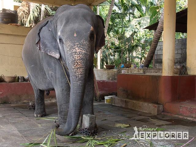 Elephant blessing in Udupi