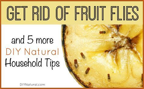 Get Rid of Fruit Flies and 5 More DIY Natural Home Solutions