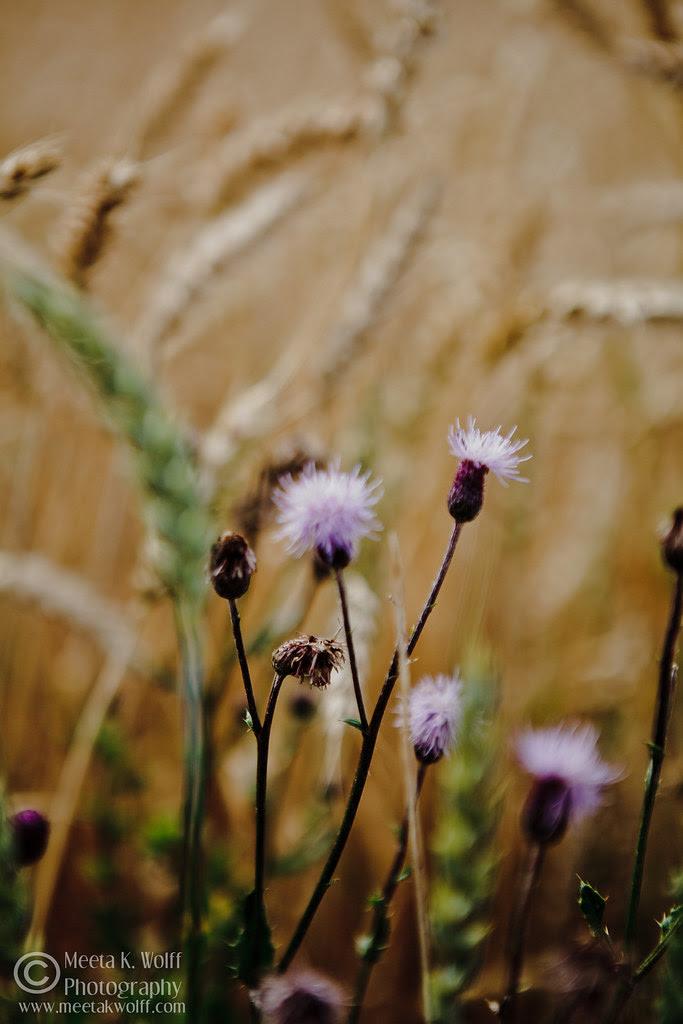 Summer Bloom by Meeta K. Wolff