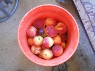 Bucket of Peaches