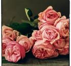 Rosalind David Austin Roses
