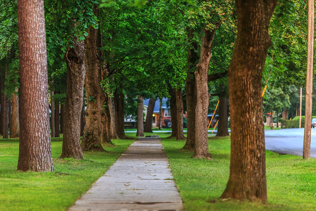 The Trees in Summer