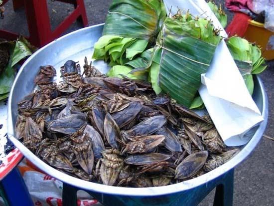Τα 16 μεγαλύτερα έντομα στον κόσμο (12)