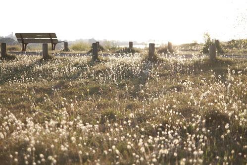 Golden field of Brignogan 3