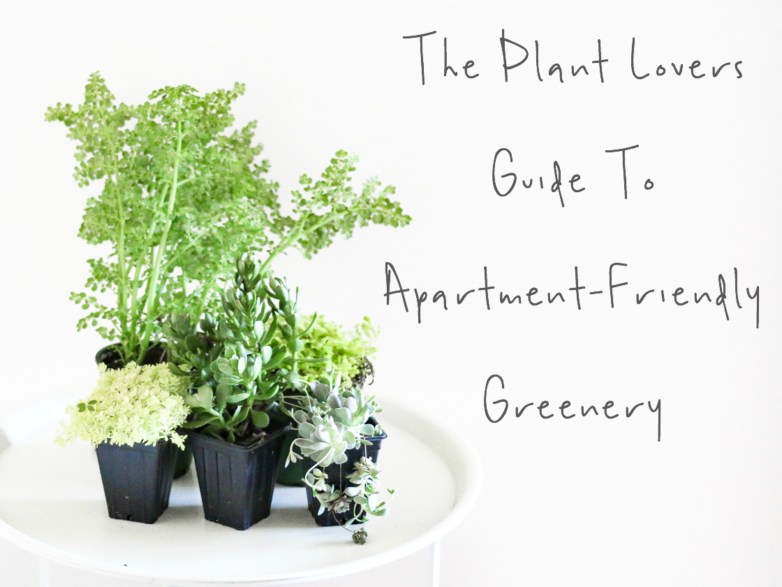 Houseplants for apartments