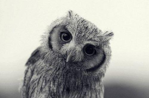http://s4.favim.com/orig/50/bird-cute-owl-Favim.com-448230.jpg