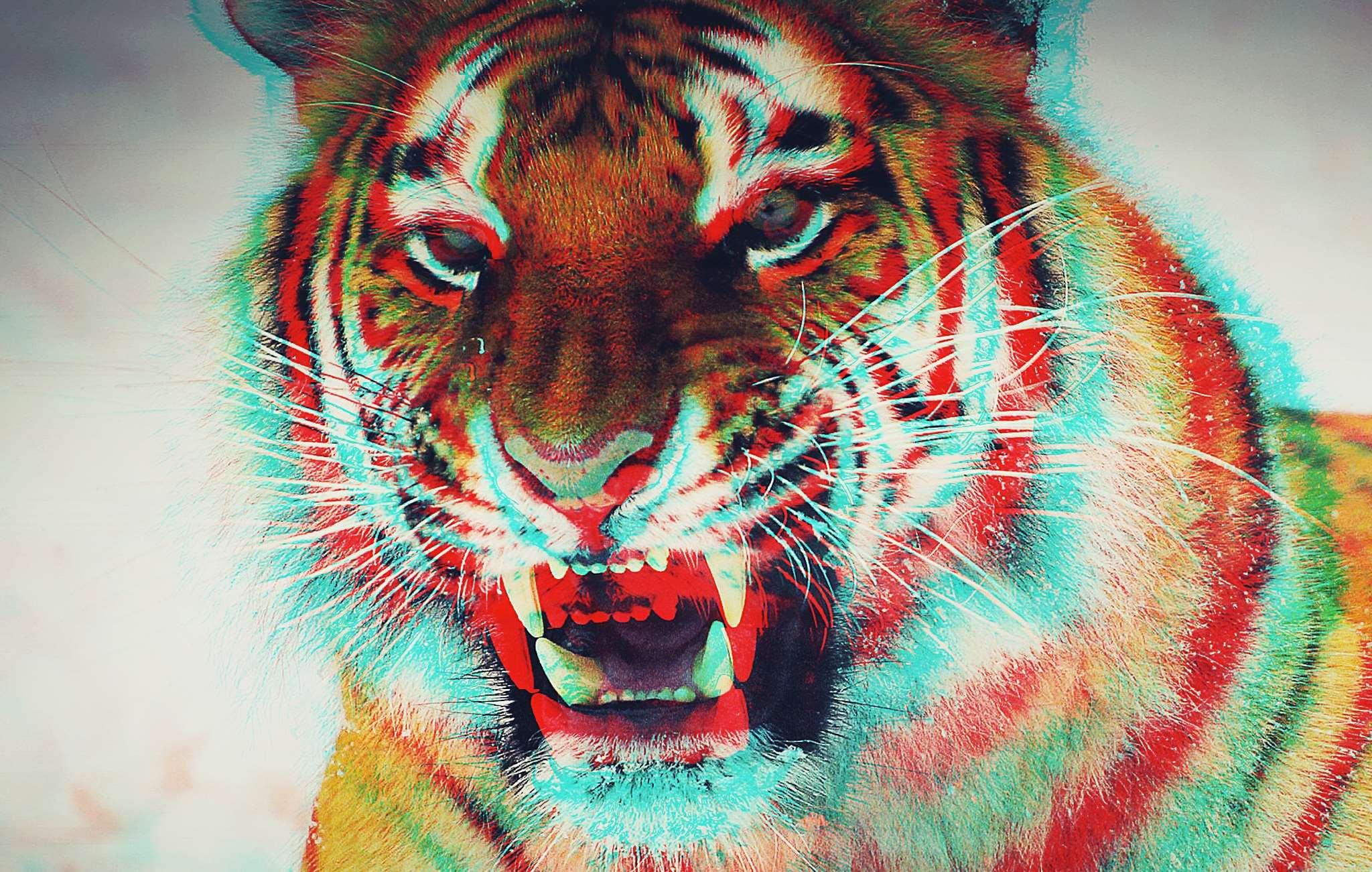 Colorful Tiger Wallpaper Hd