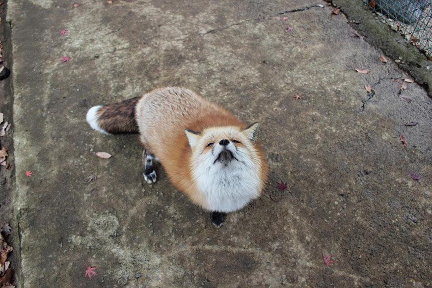 zao-fox-village-japan-7