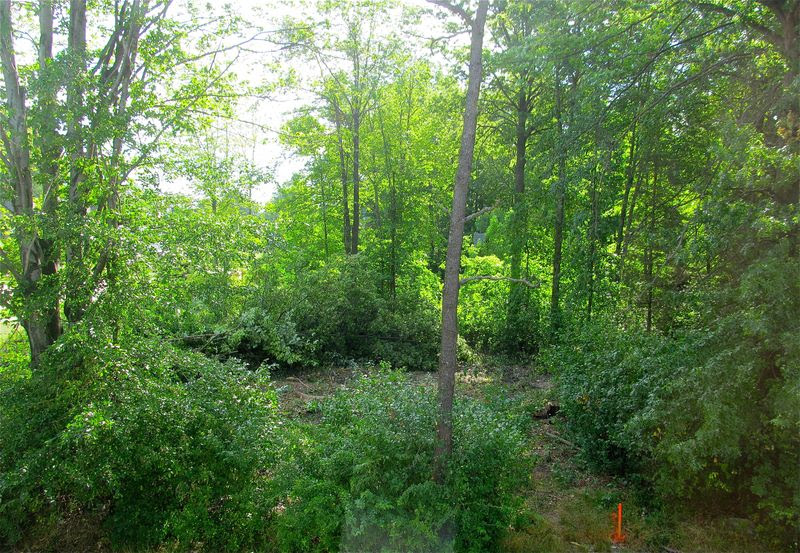 Garden Ideas For Wooded Areas | Architecture Decorating Ideas on Wooded Backyard Ideas id=74736