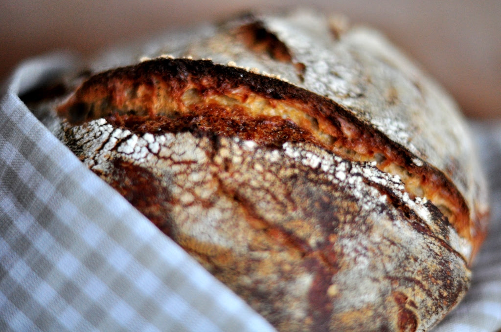 48-Hour Italian Rustic Sourdough Loaf with Kamut - Bread ...