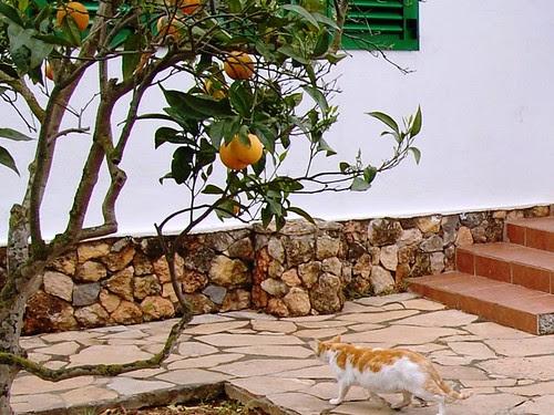 CSC_0319 un gato doméstico