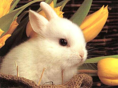 http://www.thepawblog.com/wp-content/uploads/2007/06/cute_rabbit.jpg