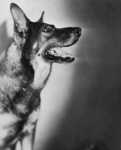Ficheiro:Rin Tin Tin 1929.JPG