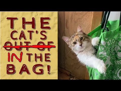 Cats -Out Of- in the Bag