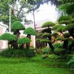 Contemporary Home Garden Design Model