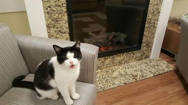 την πρώτη γάτα νοσοκόμα του κόσμου Γνωριστε την Oreo γάτες γάτα νοσοκόμα Γάτα