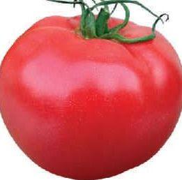 Pomidor Aphen F1 Clx37397 Malinowy 250 Szt Sow085642 12600 Zł
