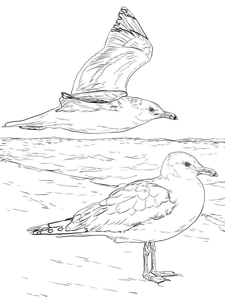 Seagulls birds coloring pages 14