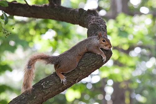 20130626_NY_Squirrel
