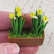 Miniature Daffodils in Window Box
