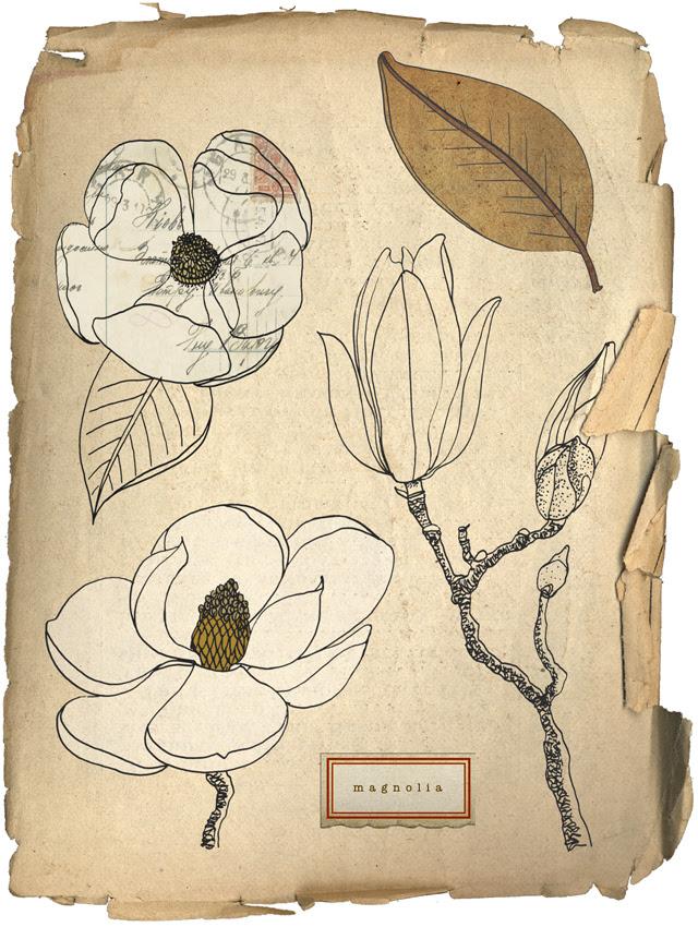 Magnolias digital collage