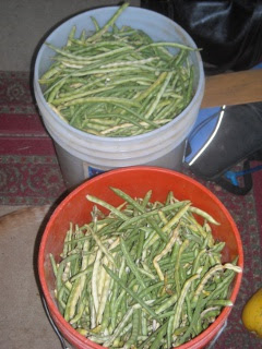 Black-Eyed Pea Green Beans