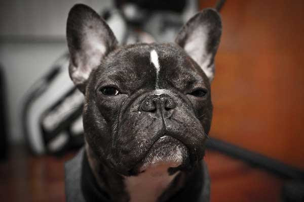 Cães conseguem perceber quando alguém está mentindo