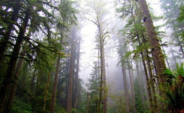 Elliott State Forest won't be put up for sale