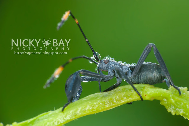 Leaf Footed Bug? - DSC_5481