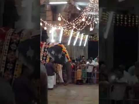 Srirangam Elephant plays Mouth organ