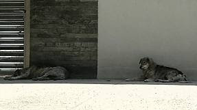 Romania: approvata legge per eutanasia dei cani randagi
