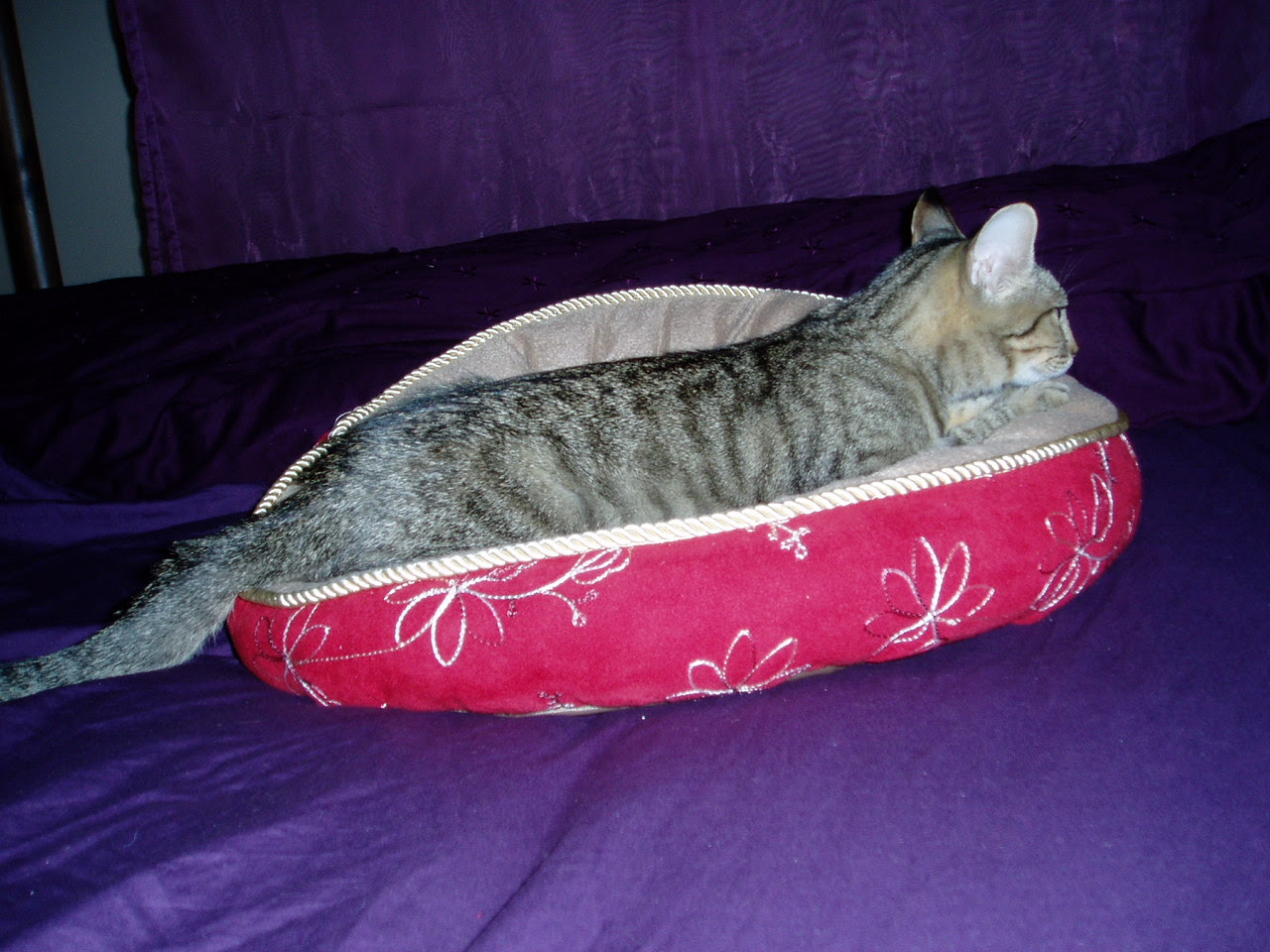 Little Ashley and her kitty bed