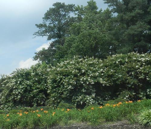 todayflowersDSCN8950