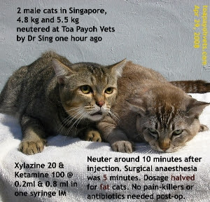 2 well loved fat cats of Singapore neutered by Dr Sing. Toa Payoh Vets