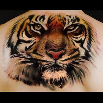 Tiger Tattoo Meanings Itattoodesignscom
