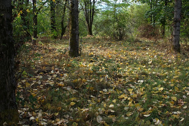 Autumn, Beggars-tick Wildlife Refuge