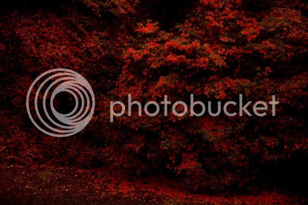 photo FLOWERS_02_zpsznlfw2bo.jpg