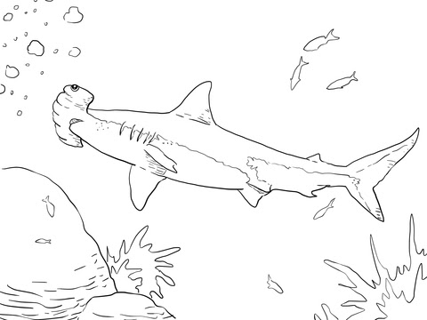 great hammerhead shark coloring page  free printable
