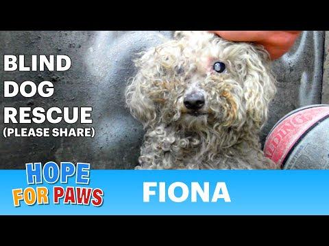 video que muestra como se ha rescatado una perra y se le ha dado un hogar