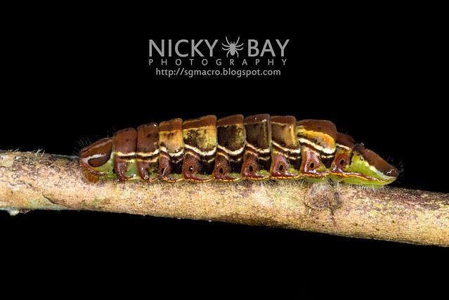 Caterpillar - DSC_9462
