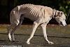 Casper, el esqueleto de la vida real que fue arrojado afuera de un refugio la noche de Halloween