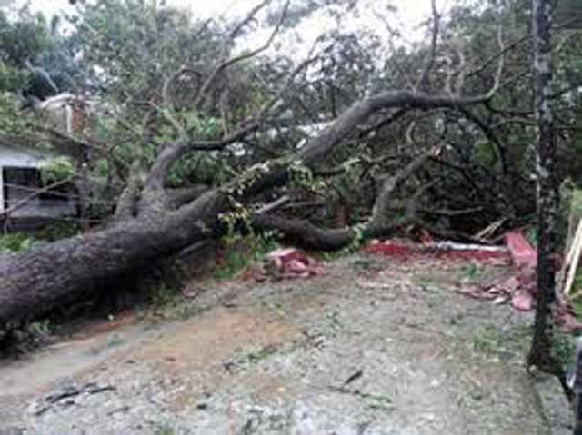 Tree collapsed in Maradana: Motorcyclist injured