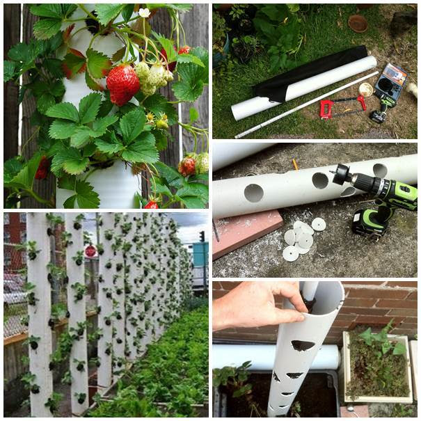 30-Creative-Uses-of-PVC-Pipes-in-Your-Home-and-Garden-5 (605x605, 78Kb)